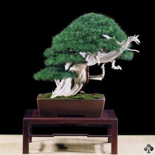 https://www.facebook.com/artisan.bonsai