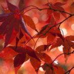 Des feuilles rouges sur un arbre