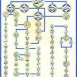 Chaîne spirituelle de la Voie Soufie Alâwiyya